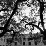 Savannah Midnight Ghost Tour