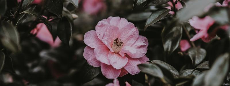 Atlanta Massee Lane Camellia Garden