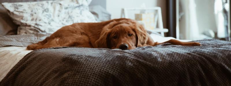 Savannah GA Pet Friendly Hotels