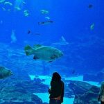 Mom's Review of Georgia Aquarium