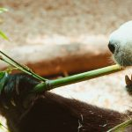 What to Expect When Visiting Zoo Atlanta