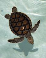 turtle-tour